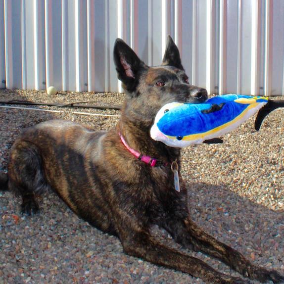 Zaska Safe Catch Dog